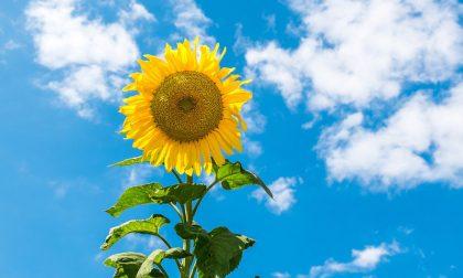 Si rafforza l'alta pressione, più soleggiato e temperature su | Previsioni meteo weekend