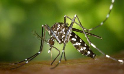 Nel Lodigiano saliti a 10 i casi di virus West Nile, uomo in rianimazione ad Alessandria