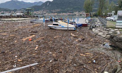 I battelli-spazzino raccolgono 500 tonnellate di alghe e 300 di legname e ramaglie