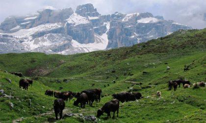 SosAlp migliora la gestione degli alpeggi del Parco Adamello