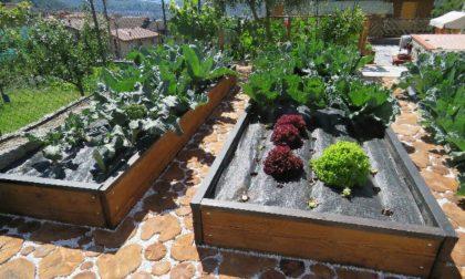 La pandemia non ferma la voglia di coltivare orti in Valle: 5 ex aequo