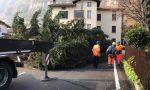 Pensionati e Protezione Civile impegnati nella potatura degli alberi dei Parchi comunali