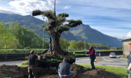 Nuovi alberi, un ulivo secolare, filari di vite e piantine in fiore: il paese si trasforma in un unico grande giardino