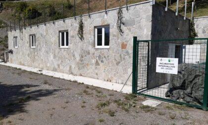 E' nato il 'Consorzio Pescatori di Valle Camonica'